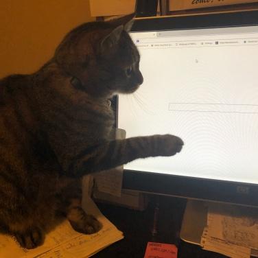 PatWahler Cat